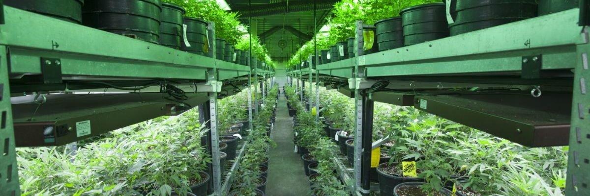 Cannabis Access Control